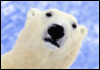 arctic_blog userpic