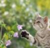 saltedboots: cat: dreamy