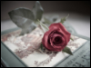 rose, book