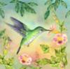 колибри 2