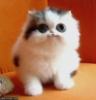 fluffy_cuddles userpic