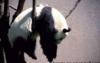 sunduk_panda userpic