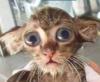 Глаза котенка