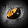 hunting_kitten