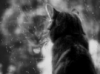 котя у окна