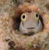 Рыбка в норке