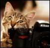 eat, cat, camera