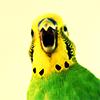 jody_bastet userpic