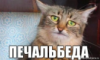 кот, беда, печаль