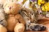 sweet kitten