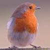 a_grey_bird userpic