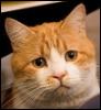 Жалобный кот