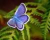 butterfly_3891