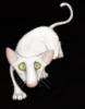 кот-блондин