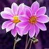 taojung userpic
