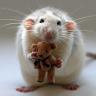 MouseBear