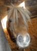 ponyfarmer userpic