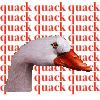 kaige68: quack