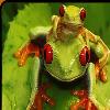 sprog321 userpic