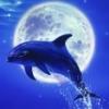 lunniy_delfin userpic
