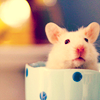Leonie: hamster in cup