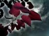 stormy_sky_leaf userpic