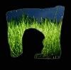 denspar userpic