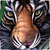 Тигра, Тигр