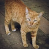 Liya: cat