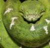 gekkon4 userpic