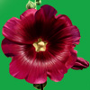 ramir_n userpic