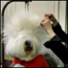doggrumer userpic
