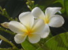 umi_mizu userpic