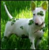 Toto_too514: Shamrock Bully