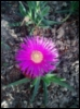 Еще цветок
