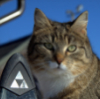 кот-триадолог