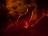 music_fox userpic