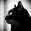 Фиксирующая сумка для кошек  что учесть при выборе