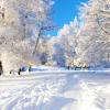 Winter-snowy trees