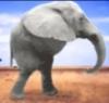 sloneg