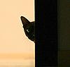 murmurelle: кошь