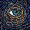 павлий глаз
