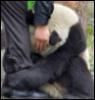 панда не терпит отказов