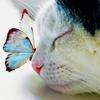 ~Lirpa~: Kitty: Butterfly; Spring: Cat butterfly