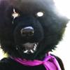 hi, doggy, happy, bec, wolf