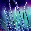 the silver lady: Spring grass in rain by meathiel