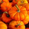 pumpkin_garden userpic