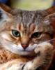 cat_scientistt userpic