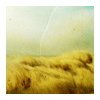 kailawen: Nature// Ocean of Grass