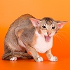 faeton_cattery userpic